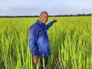La commune de Kintinian opte pour la riziculture